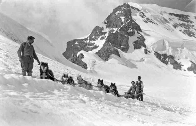 Wintersport am Jungfraujoch: Schlittenhunde