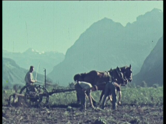 Das Glarner Industrie-Pflanzwerk (GIP) 1943-1946 (Teil III)