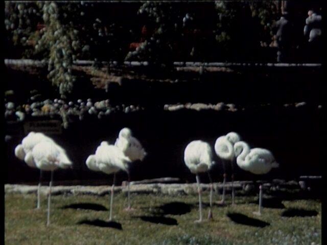 Klöntal sowie erster Teil zu Zoo in Zürich