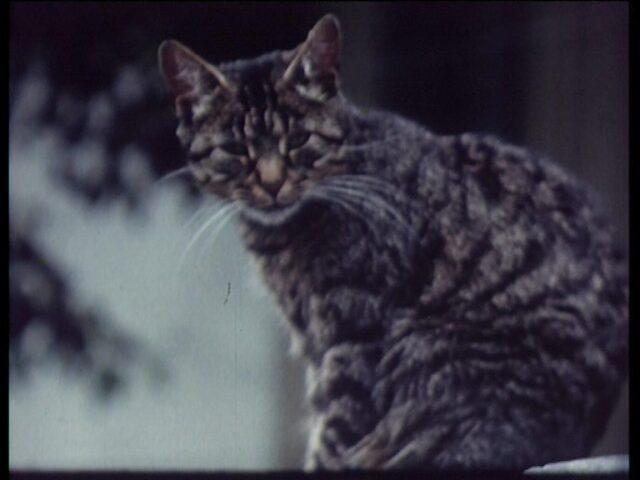 Katze und Diesbachfall
