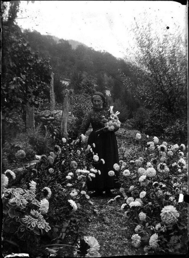 Fedela Galgiani Peri che coglie dei fiori