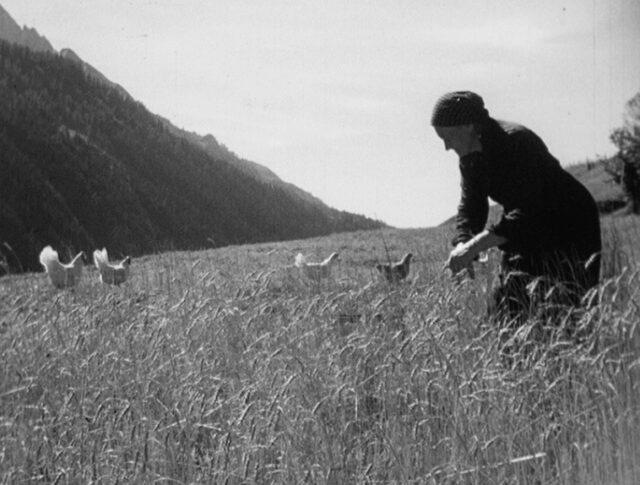 """""""Autunno nel Ticino""""... ed altrove (0284-1)"""