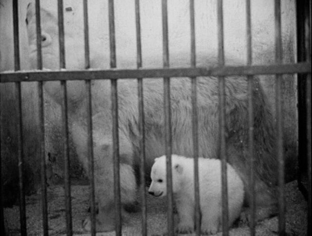 """Regali di Pasqua allo """"Zoo"""" (0333-1)"""