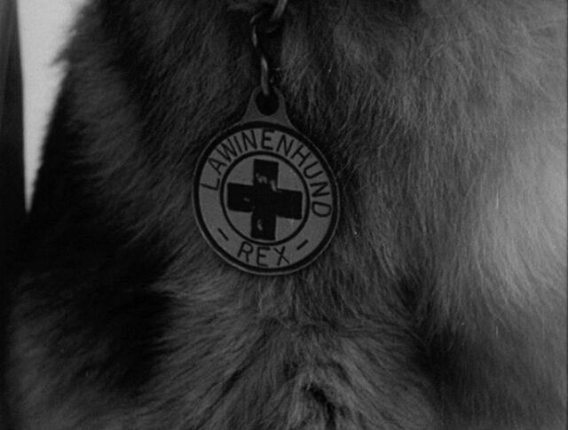 Cani da valanga (0413-3)