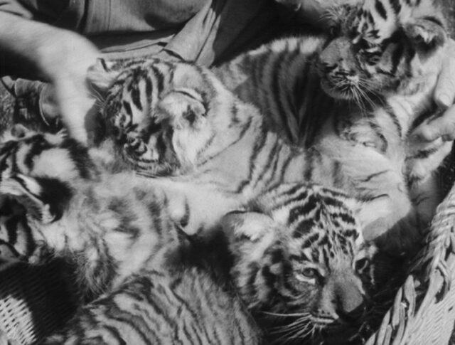 Neonati allo zoo di Basilea (0815-4)