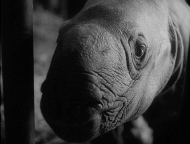 Lieto evento nello Zoo basilese (1121-2)
