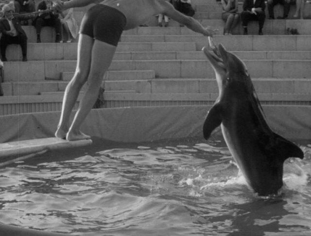 Delfini in allenamento (1171-6)