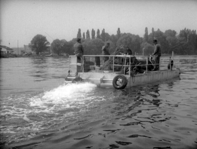 Le vacche d'acqua del lago di Costanza (1228-2)