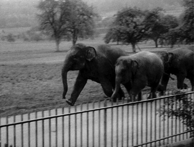 Tre piccoli elefanti (1382-5)
