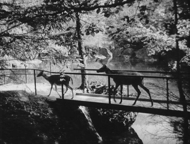 Goldau: Jardin zoologique (0098-4)