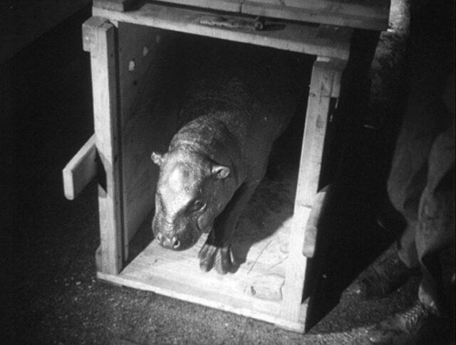 Les 75 ans du Zoo de Bâle (0371-3)