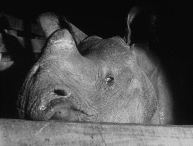 Joymati au zoo (0534-2)