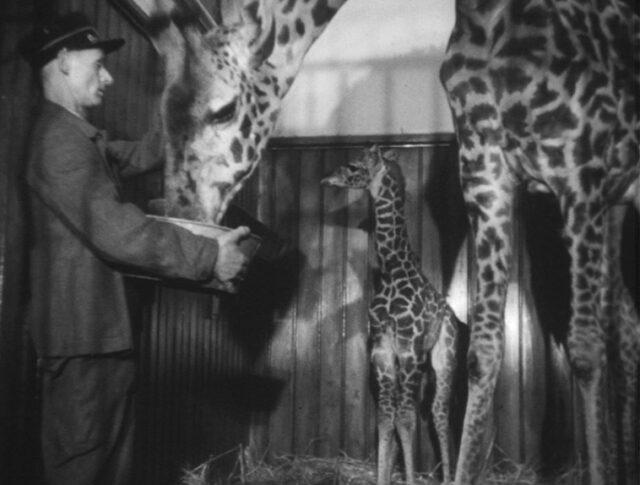 Naissance au zoo (0608-3)