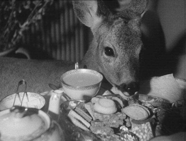 Le chevreuil – un animal domestique (0798-2)