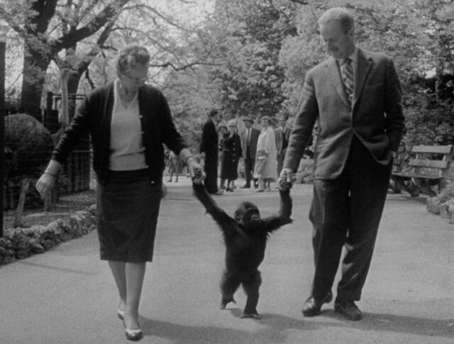 Un enfant gorille (0966-3)