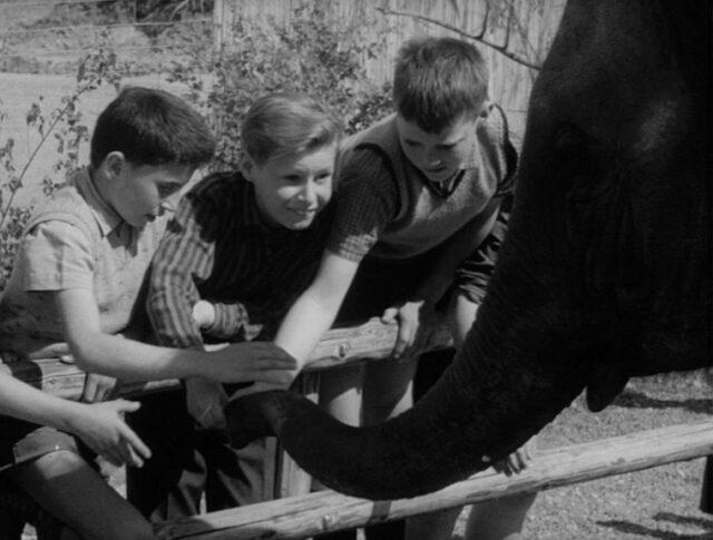 Un paradis pour les enfants et les animaux (1021-1)