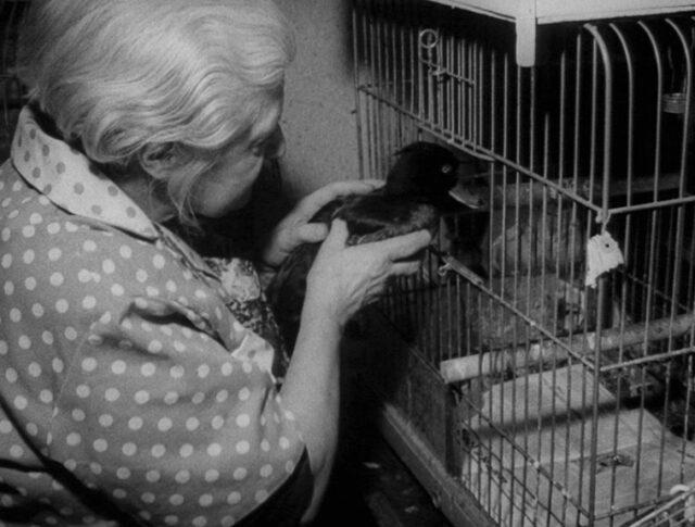 Un refuge pour oiseaux (1062-2)