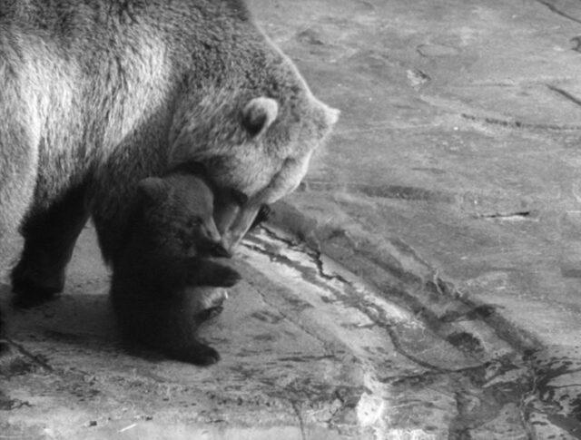 Les ours se suivent… (1209-2)