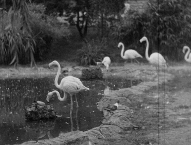 Der Basler Zoo (0190-2)