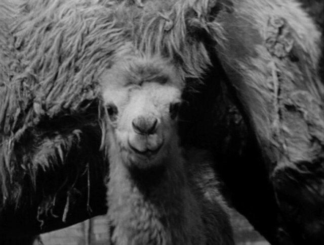 Die Kamera im Zoo (Eine Produktion Pro Film, Zürich) (0258-1)