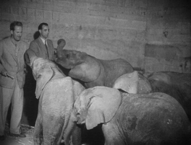 Elephantenkinder (0547-2)