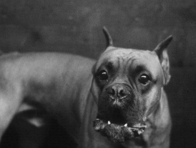 Ein Hundeleben (0618-5)