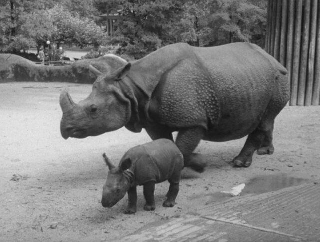 Erstaunliches im Zoo (0832-6)