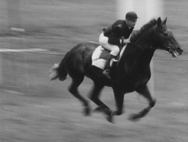 Pferdesport (0873-5)