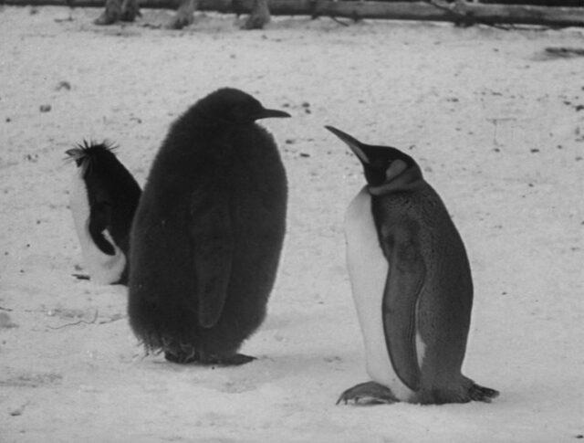 Winterlicher Zoo (0902-1)