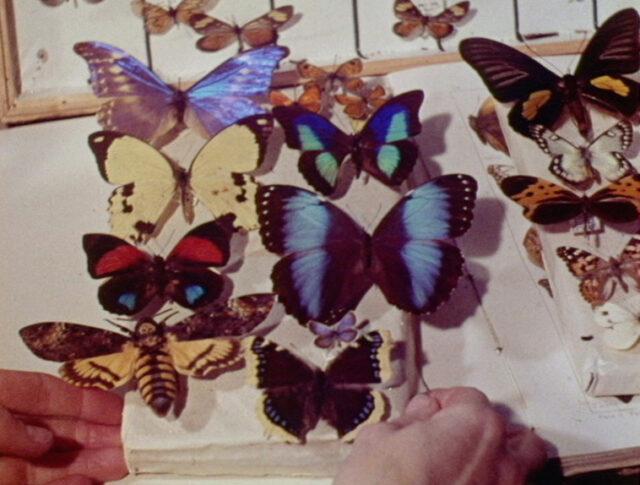 Farbenfilm: Wunder hinter Glas (1027-2)