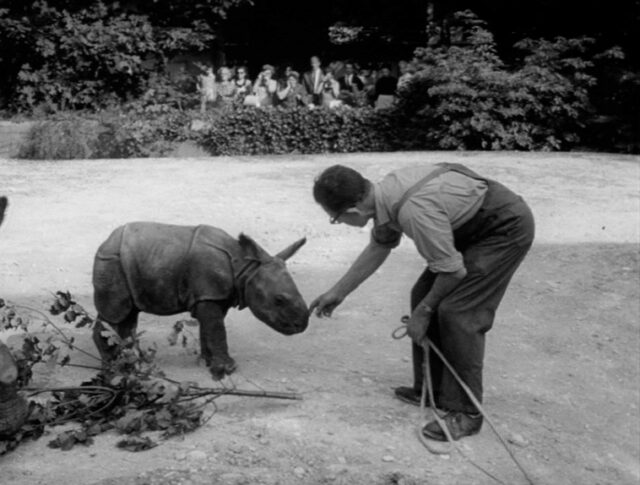 Nachwuchs im Zoo (1187-5)