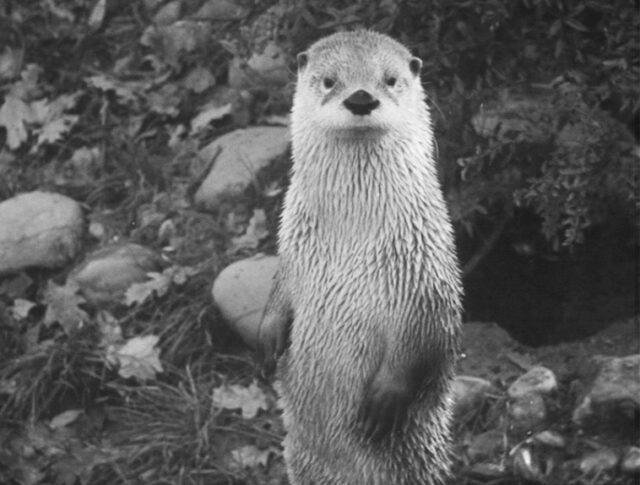 Schweizer Fauna neu entdeckt (1287-1)