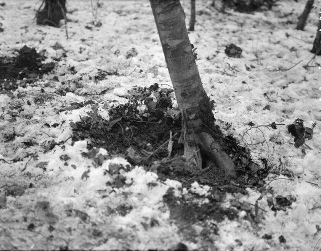 Einschlag einer deutschen 15 cm Granate