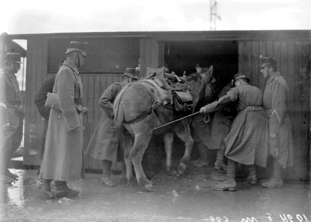 Ein Maultier wird in den Eisenbahnwagen verladen