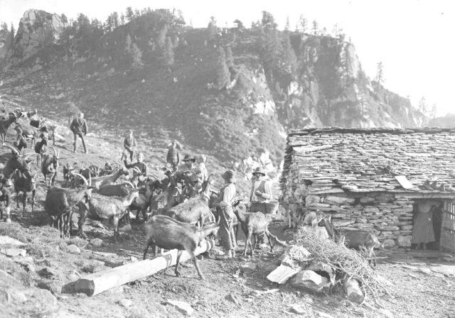 Eine Ziegenherde bei einer ärmlichen Alphütte