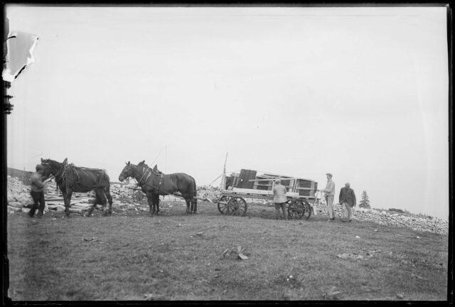 Chevaux attelés à un chariot.