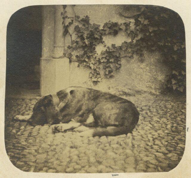 Schlafender Hund, um 1860