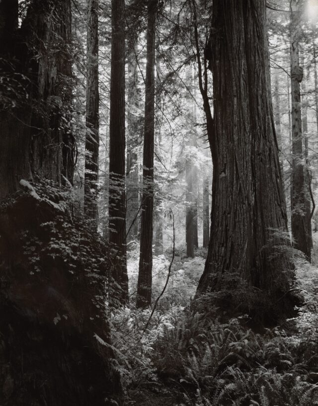 Am Redwood Highway, Kalifornien, 1953