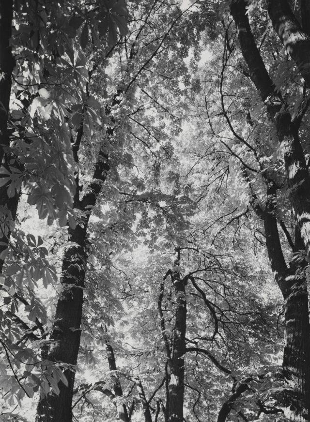 Im Wald, 1932