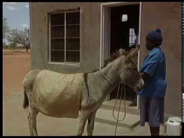 Programa de Desarrollo de Recursos Presenta Generacion de Ingresos Zimbabue « El efecto multiplicador » (7)