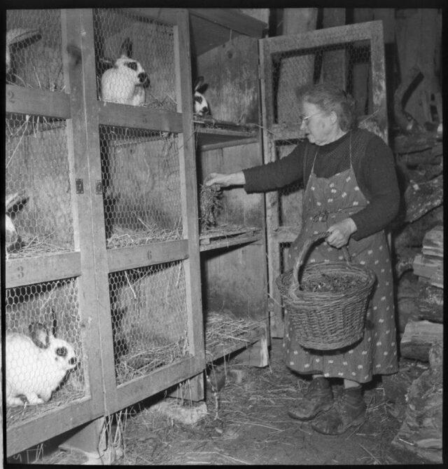 [Magd beim Füttern der Kaninchen]