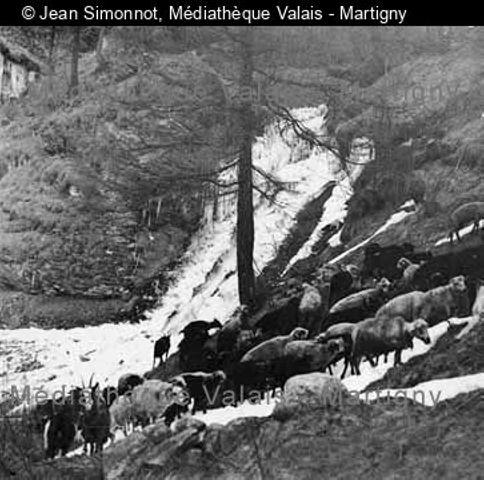 [Troupeau de moutons à Daillec, Val d'Hérens]