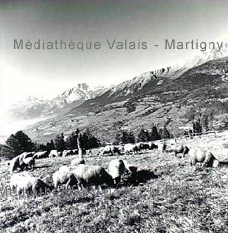 [Moutons et berger vers Montana]