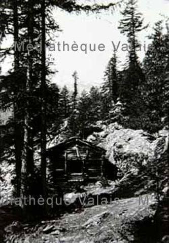 [Raccard dans la forêt, région de Zermatt]