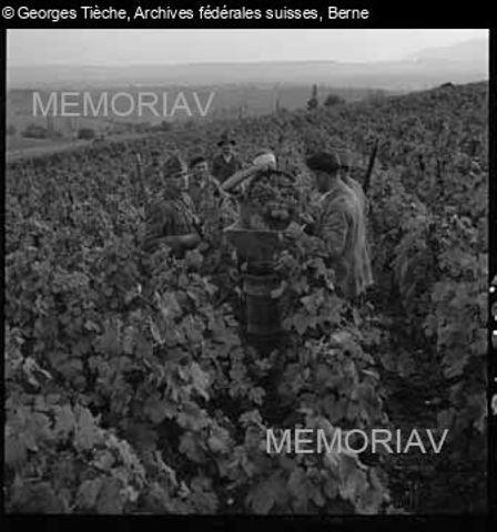 [Soldaten helfen für die Weinlese]