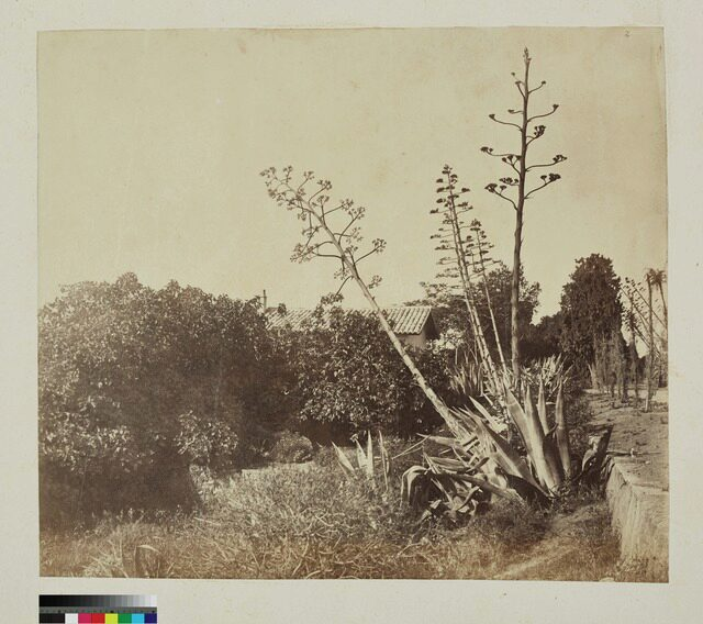 France, Nice, campagne (P.2.D.2.09.02.002)