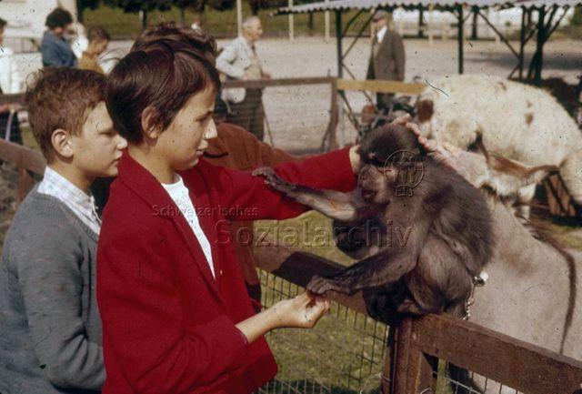 """""""Freizeitanlagen, Gemeinschaftszentren: Zirkustiere in der FZA Buchegg, Zürich"""" - Kinder am Tiergehege mit Esel und Schaf, ein Kind streichelt einen braunhaarigen Affen; um 1970"""