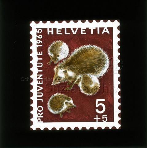 """Diaserie von Kinodias, """"alten Dias"""" und Karten der Pro Juventute; """"Pro Juventute 1965 Helvetia 5 +5""""; Briefmarke mit Igelfamilie; 1965"""