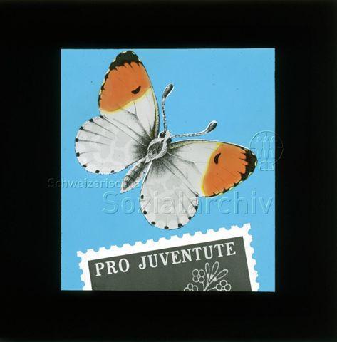 """Diaserie von Kinodias, """"alten Dias"""" und Karten der Pro Juventute; """"Pro Juventute""""; Schmetterling; um 1970"""