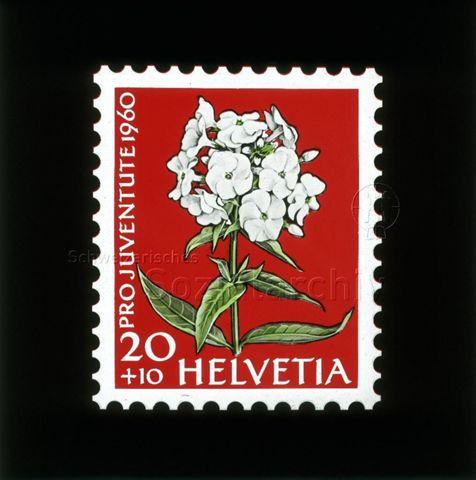 """Diaserie Briefmarken; """"Helvetia 20 +10, Pro Juventute 1960""""; weisse Blume, wahrscheinlich Wiesen-Phlox """"Mrs Lingard""""; 1960"""
